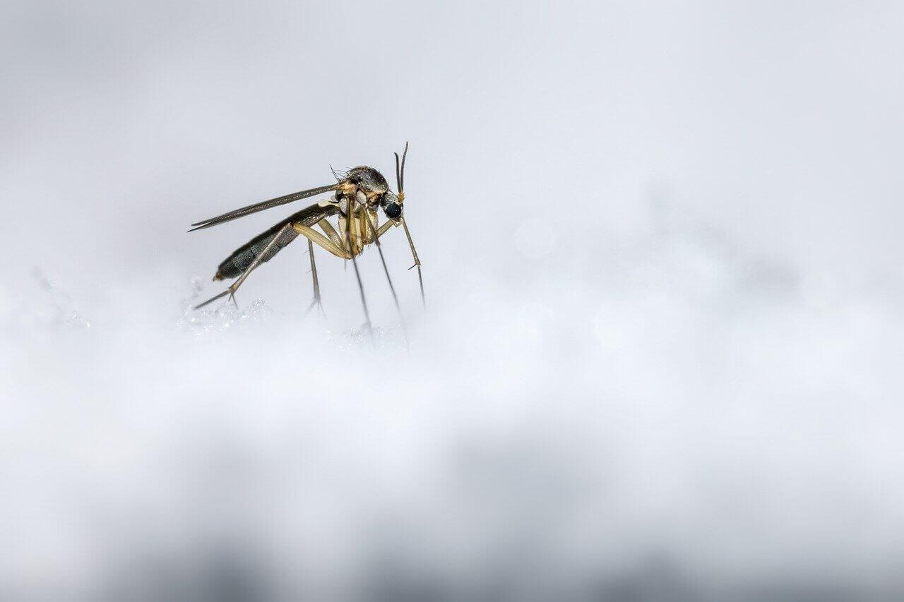 Trebate-li-brinuti-o-krpeljima-i-komaracima-zimi
