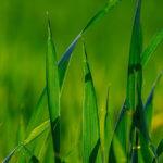 ekoloski nacin za zaustavljanje komaraca